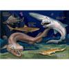 ジグソーパズル 330ピース 深海ザメ