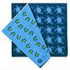 ガーゼハンカチ 標本BOX アオウミガメ