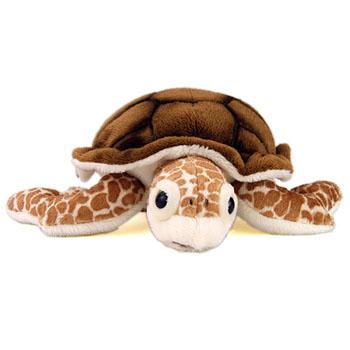 アカウミガメの画像 p1_5