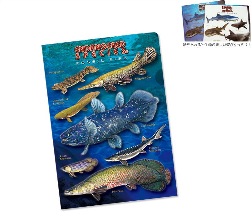 クリアケース 古代魚