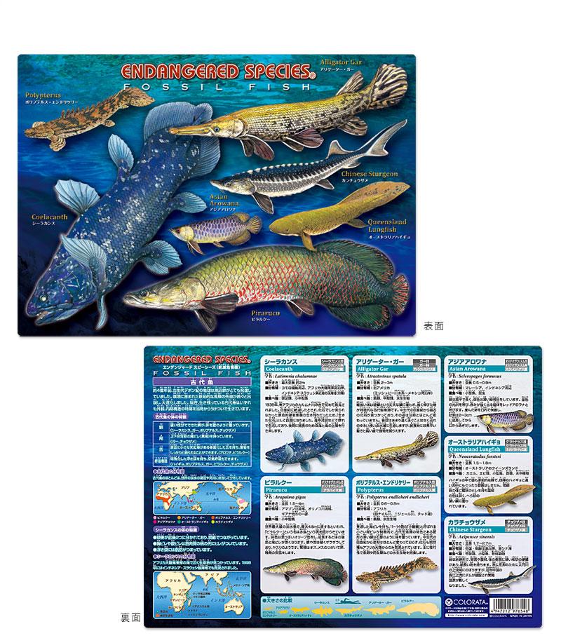 アニマルガイドシート(下敷き) 古代魚