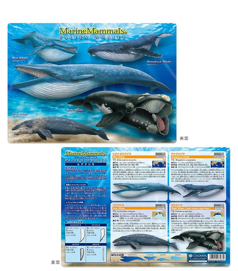 アニマルガイドシート(下敷き) ヒゲクジラ