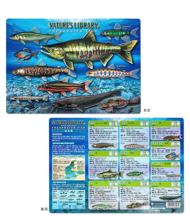 アニマルガイドシート(下敷き) 淡水魚