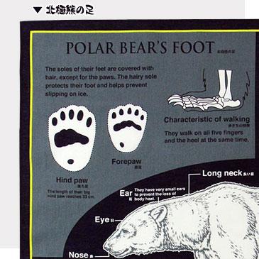 北極熊の足