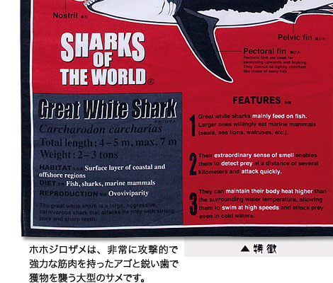 ホホジロザメの特徴