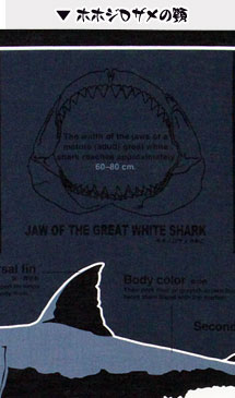 ホホジロザメの顎