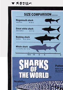 大きさ比べ