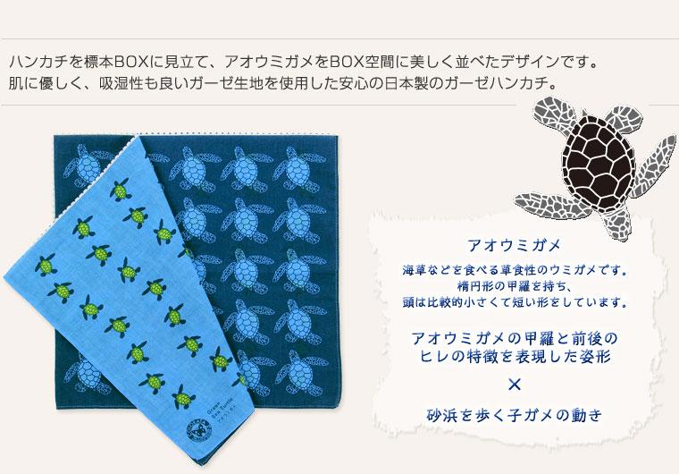 標本ボックス ガーゼハンカチ アオウミガメ
