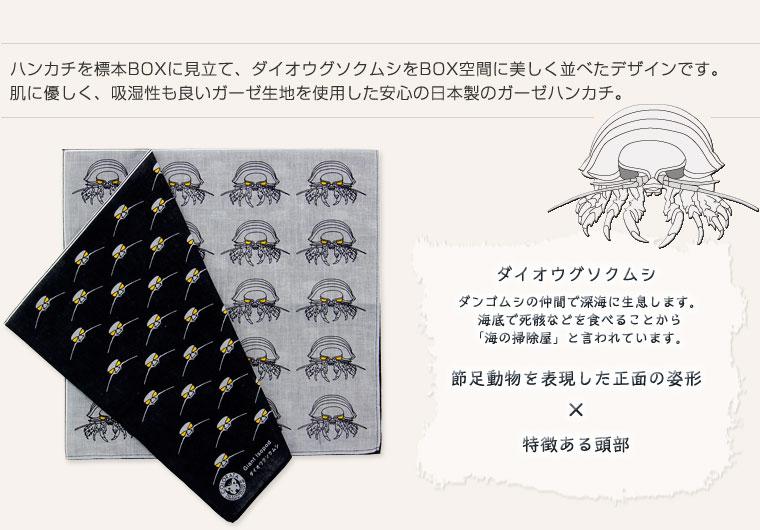 標本ボックス ガーゼハンカチ ダイオウグソクムシ