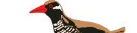 日本固有種ヤンバルクイナの姿を織りこんだマフラータオル