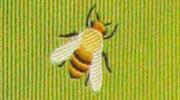 生物・動物・アニマル柄ネクタイ ミツバチ モチーフ
