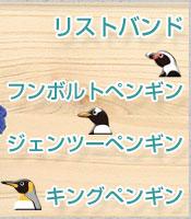 リストバンド フンボルトペンギン、ジェンツーペンギン、キングペンギン