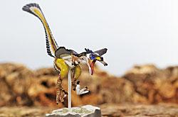 立体図鑑  羽毛恐竜プレミアムボックス ヴェロキラプトル