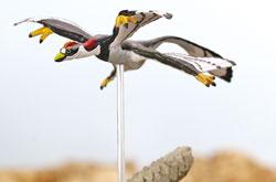 立体図鑑  羽毛恐竜プレミアムボックス ミクロラプトル