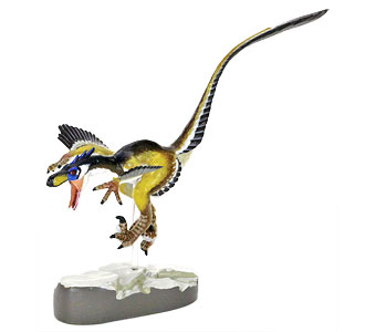 立体図鑑羽毛恐竜プレミアムボックス ヴェロキラプトル フィギュア