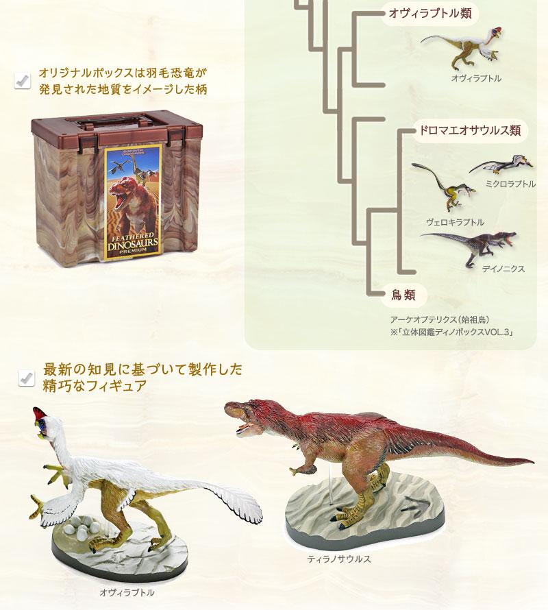 進化の過程も想像できる精巧なモデル 羽毛恐竜プレミアムボックス