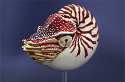 立体図鑑  深海生物プレミアムボックス オウムガイ