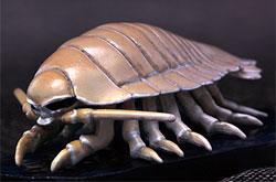 立体図鑑  深海生物プレミアムボックス ダイオウグソクムシ
