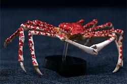 立体図鑑  深海生物プレミアムボックス タカアシガニ