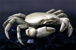 立体図鑑  深海生物プレミアムボックス ユノハナガニ
