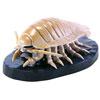 立体図鑑深海生物プレミアムボックス ダイオウグソクムシ フィギュア