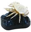 立体図鑑深海生物プレミアムボックス ゴエモンコシオリエビ フィギュア