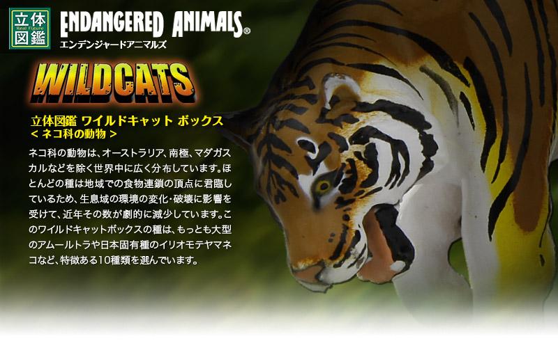立体図鑑 ワイルドキャットボックス(絶滅危惧のネコ科動物10種)