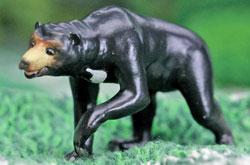 立体図鑑 ワイルドベアーボックス マレーグマ