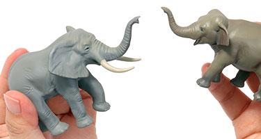 アフリカゾウとアジアゾウの違い