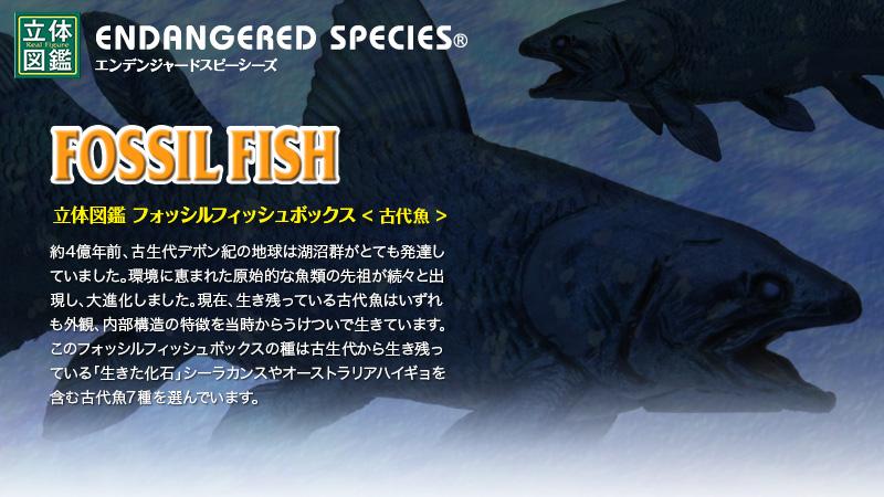 立体図鑑 フォッシルフィッシュボックス(シーラカンスフィギュアをはじめ古代魚)