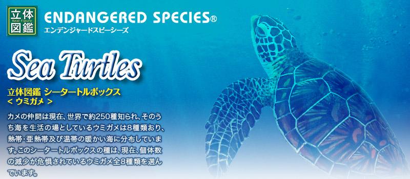 立体図鑑 シータートルボックス(世界に生息している海亀の全8種を揃えたウミガメ)