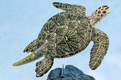 立体図鑑 シータートルボックス クロウミガメ