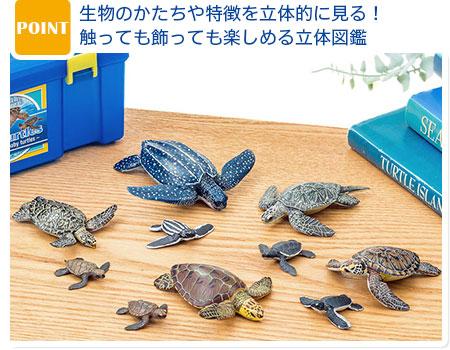 ウミガメ 親子 フィギュア 立体図鑑 ウミガメの親子ボックス