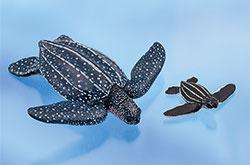 立体図鑑 ウミガメの親子ボックス オサガメ