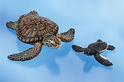 立体図鑑 ウミガメの親子ボックス アオウミガメ