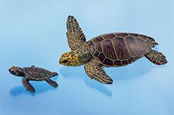 立体図鑑 ウミガメの親子ボックス アカウミガメ