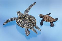 立体図鑑 ウミガメの親子ボックス タイマイ