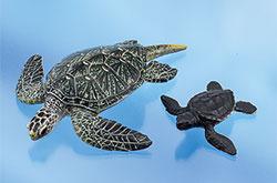 立体図鑑 ウミガメの親子ボックス クロウミガメ