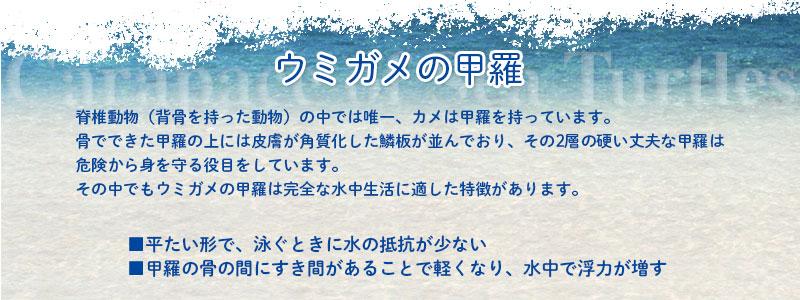 ウミガメの甲羅