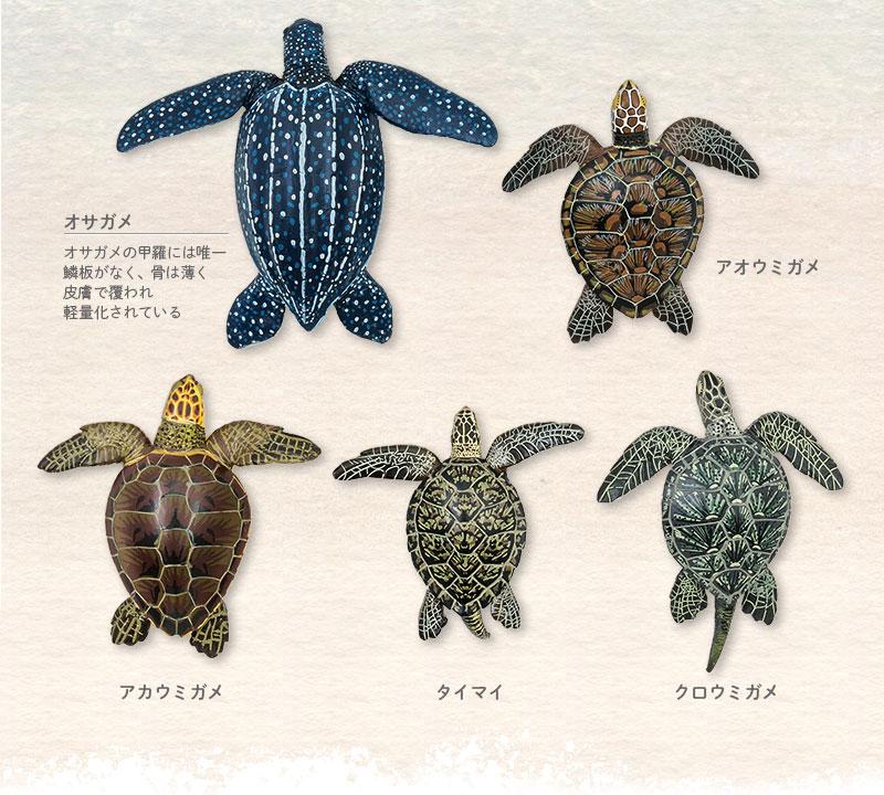 ウミガメの甲羅の比較