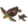 立体図鑑ウミガメの親子ボックス アカウミガメ フィギュア