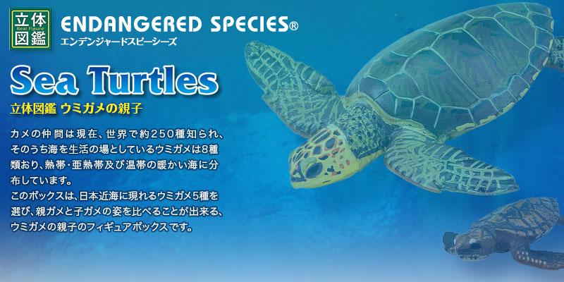 立体図鑑 ウミガメの親子ボックス(日本近海に現れるウミガメ5種の親子)