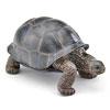 立体図鑑レプタイルボックス アルダブラゾウガメ フィギュア