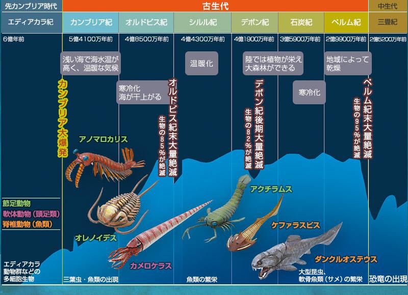 様々な機能を獲得し、進化した古生代の生物