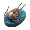 立体図鑑 古生代の生物ボックス オレノイデス フィギュア