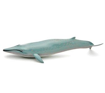 立体図鑑マリンママルボックス シロナガスクジラ フィギュア