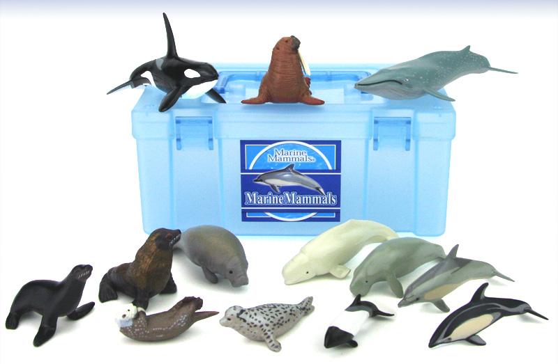 立体図鑑 マリンママルボックス(海洋性哺乳類 )