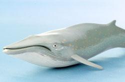 立体図鑑 マリンママルボックス シロナガスクジラ