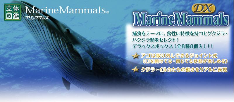 立体図鑑マリンママルデラックスボックス(クジラ・イルカフィギュア)