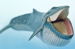 立体図鑑 マリンママルデラックスボックス シロナガスクジラ